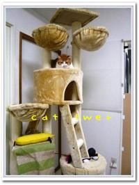 Cattwer_2