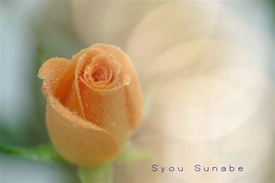 Syou_sunabe2